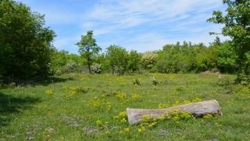 Poljoprivredno zemljište na prodaju Višnjan