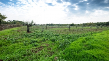 Farm land for sale Tar-Vabriga Poreč